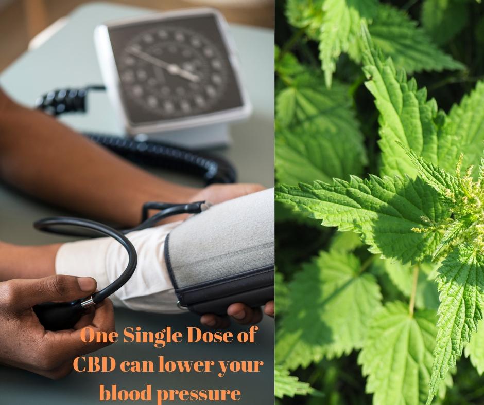 cbd for blood pressure