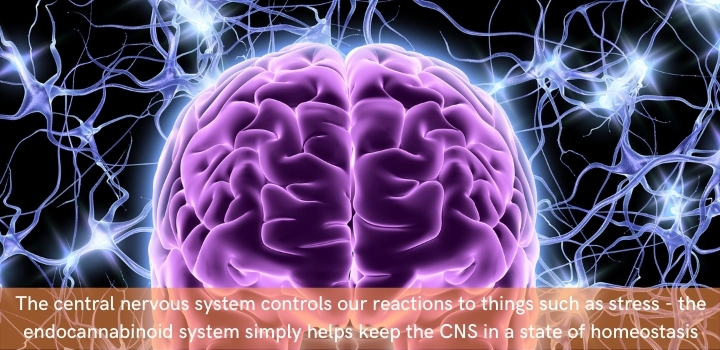 Endocannabinoid system and the Central nervous system
