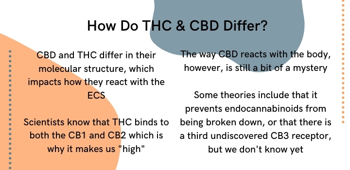 how do CBD and THC react with the ECS