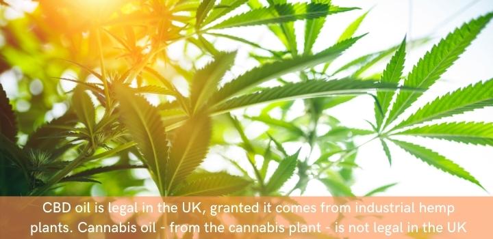 is cbd oil legal uk 2020