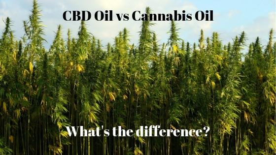 cbd oil vs cannabis oil