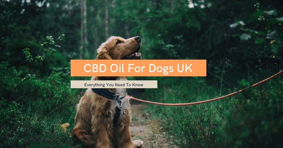 CBD Oil For Dogs UK