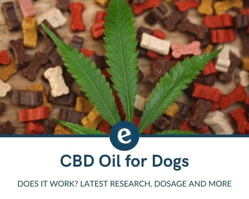 CBD oil for dogs UK