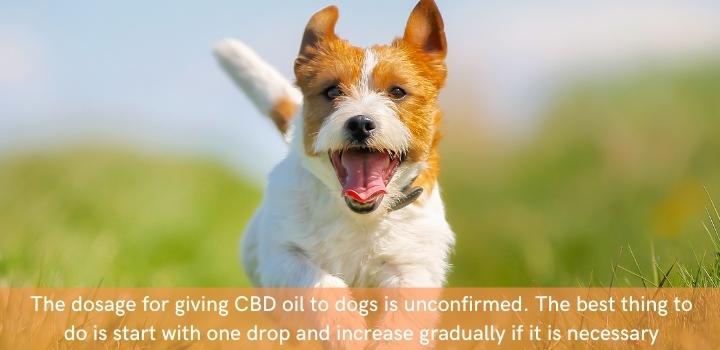 CBD oil for dogs dosage UK