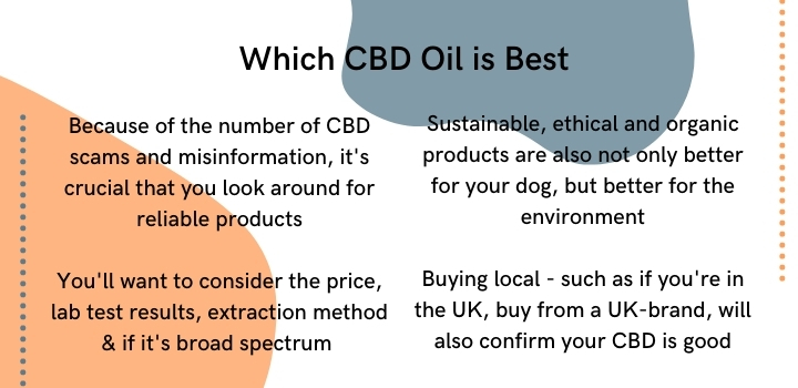 Which CBD oil is best for dogs
