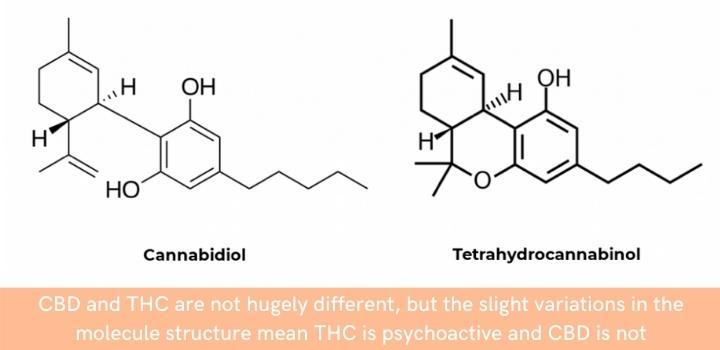 CBD and THC molecule