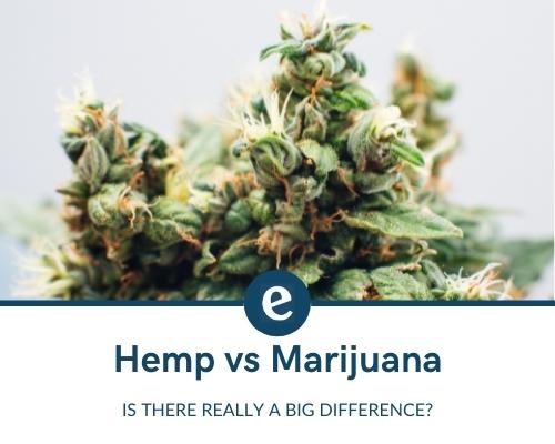 The difference between hemp and marijuana
