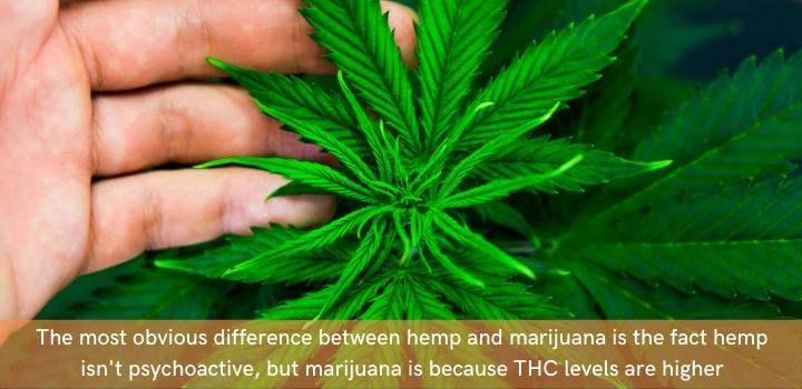 Hemp vs marijuana composition