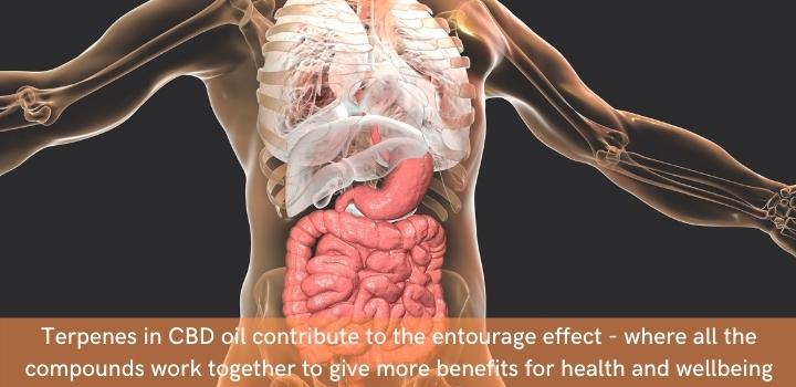 How do terpenes work in the body?