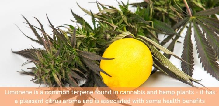What terpenes are in CBD?
