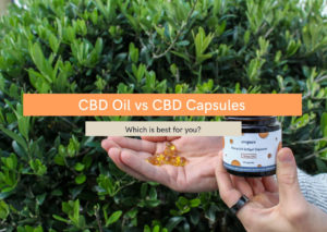 CBD oil vs capsules