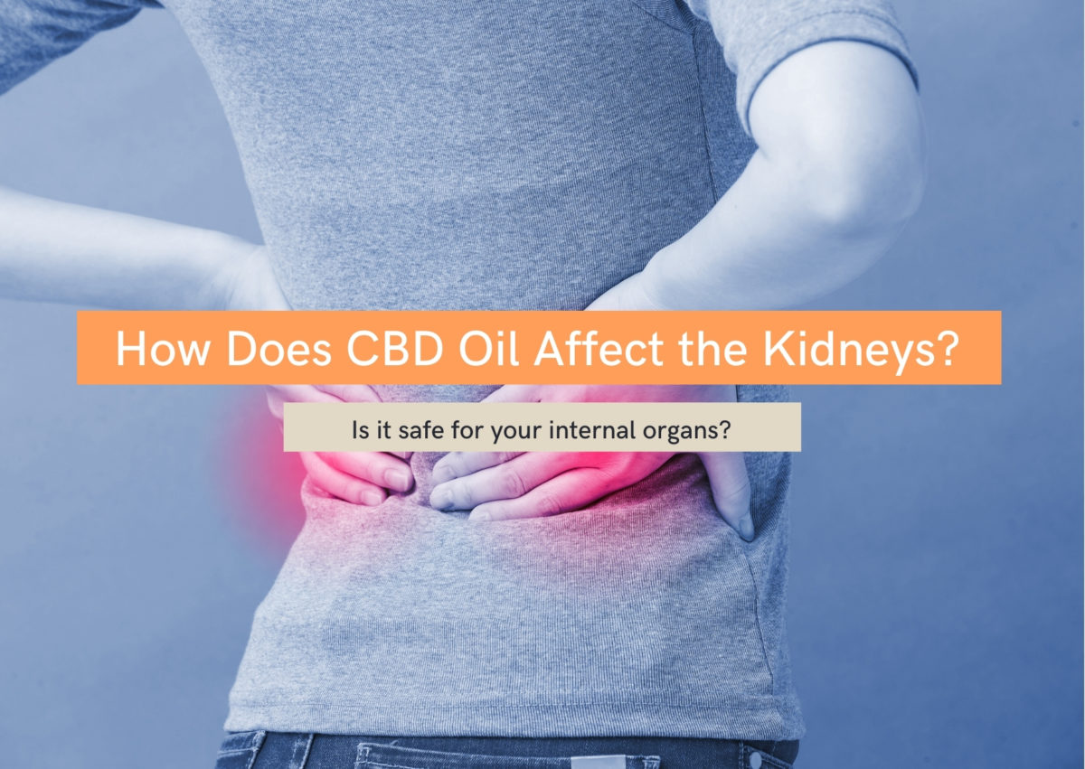 How does CBD oil affect the kidneys