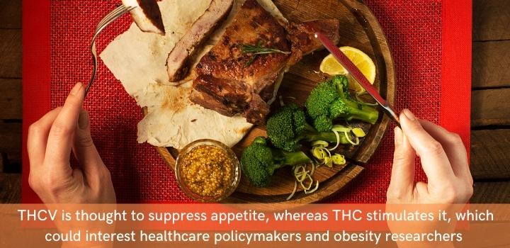 How does THCV impact appetite