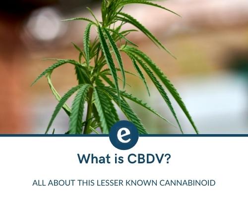 What is CBDV