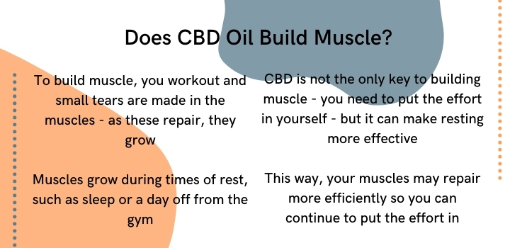 Does CBD oil build muscle