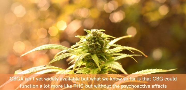 CBGA vs THC