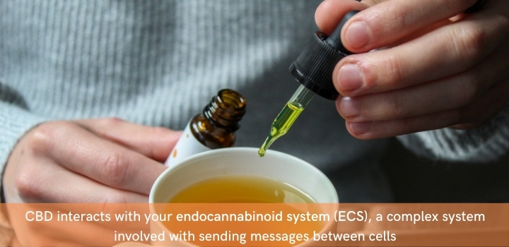 How can CBD oil help with endometriosis symptoms